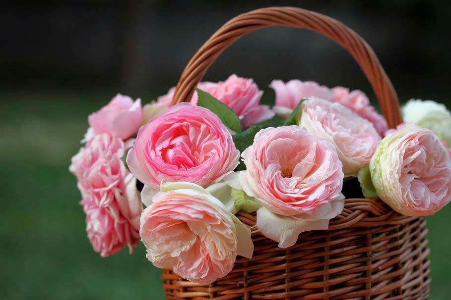 roses-basket-flower-pic