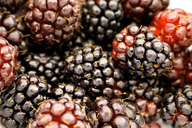 gambar buah boysenberry