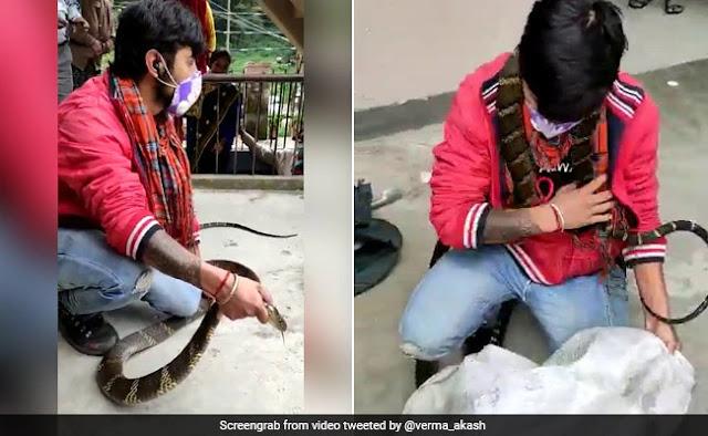 घर के अंदर छिपा बैठा था इतना बड़ा किंग कोबरा, मुंह पकड़ा तो झपटा और फिर... देखें भयानक Video