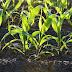 Faktor-faktor yang Memengaruhi Pertumbuhan Tumbuhan