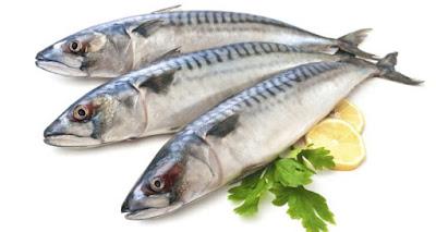 cá lục cung cấp protein và chất đạm