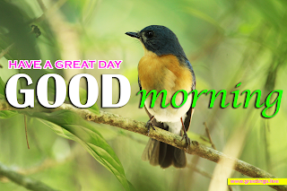 good morning wishes ,nature, bird