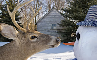 A deer face to face with a carrot-nosed snowman.