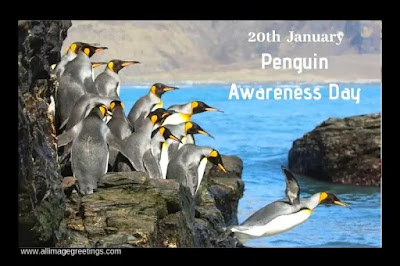 world penguin awareness day 2020 image