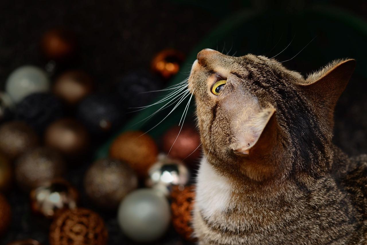 Aliments interdits et dangereux pour les chats
