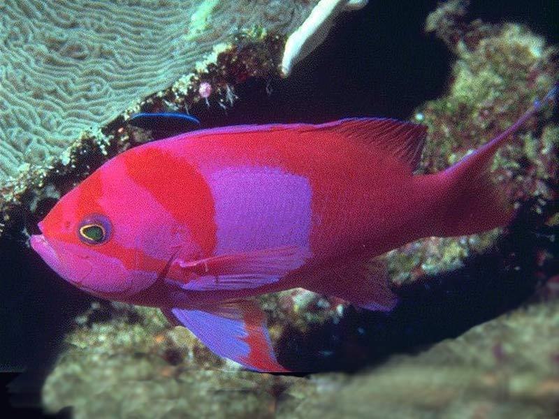 Fish Wallpapers: Fish Photos