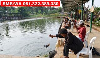 Essen Tenggiri Ikan Bawal Galatama
