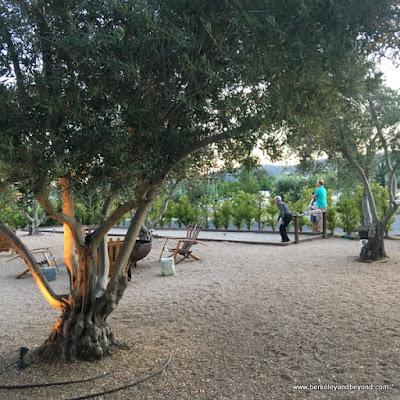 bocce ball court at Allegretto Vineyard Resort in Paso Robles, California