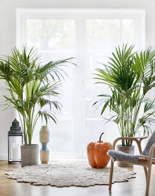 Cara Efektif yang Bisa Kamu Coba untuk Melembabkan Udara di Dalam Rumah