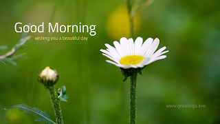 Simple white Daisy flower wishes greetings card with good morning text.