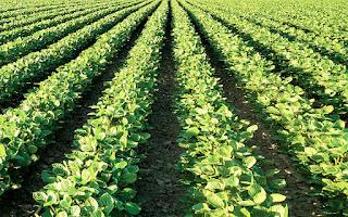 موضوع الإستثمار الزراعي ( الإستعمار الزراعي )