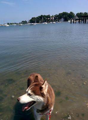 Dog Days at the Beach!