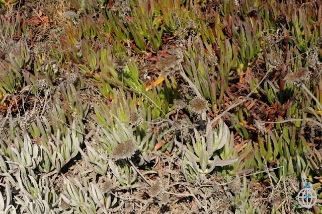 roślinność de roca