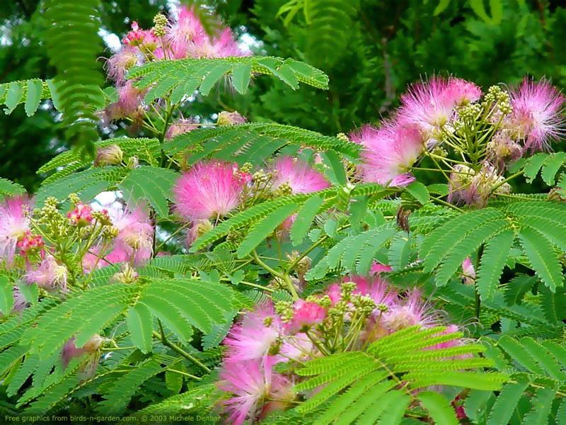 Granny Mountain: Mama Mimosa