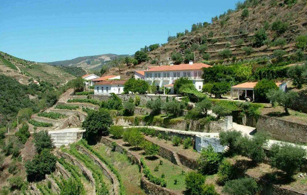 Виноградник Quinta do Panascal в Дору