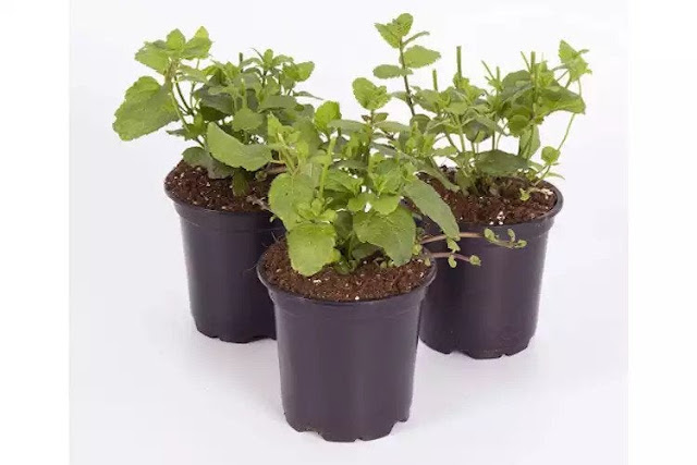 Vegetables And Herbs To Grow At Home