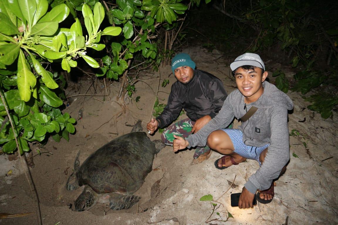 Bersama Babinsa, Menjaga Keberlangsungan Penyu di Pulau Derawan dan Jaga Telur Tak Dicuri, Dibudidayakan Jadi Tukik