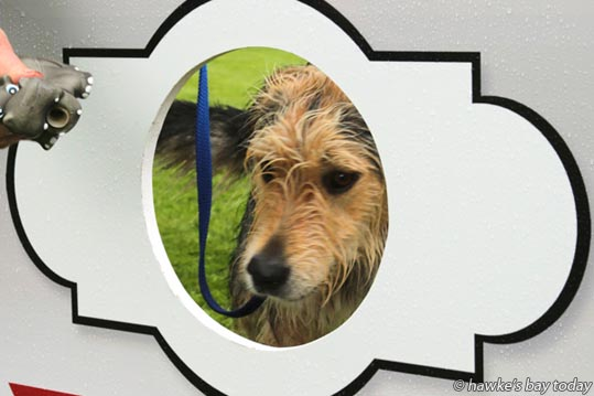 Photo op: Pip, a beardy huntaway cross - Dog show delights - Birdwoods Great Dog Show, a fundraiser for Hastings and Districts SPCA, at Birdwoods Gallery, Havelock North. photograph