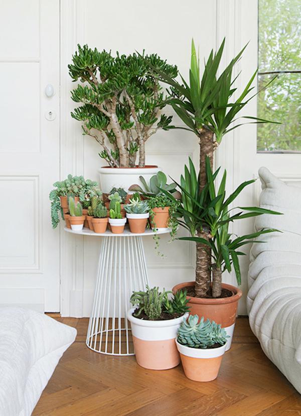 las 5 mejores ideas para tener plantas en casa la garbatella dise o de interiores proyectos. Black Bedroom Furniture Sets. Home Design Ideas