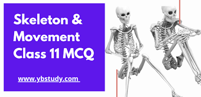 Skeleton and Movement MCQ