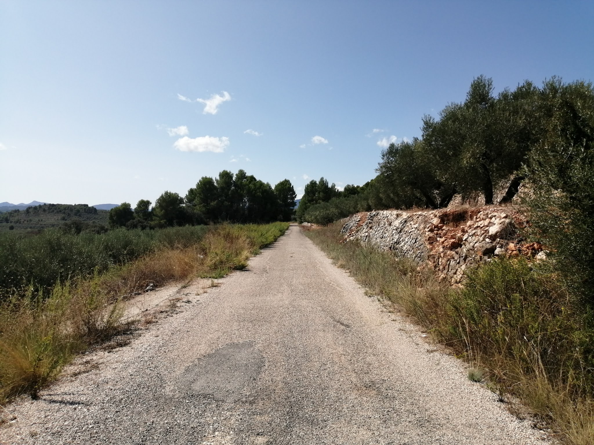 Asphalted section of the Serpis Greenway between Lorcha and Beniarrés