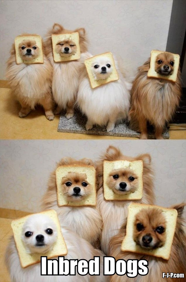 Funny Inbred Bread Dogs Joke Meme Picture