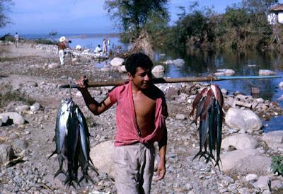 Vendedor de pescados Puerto Vallarta