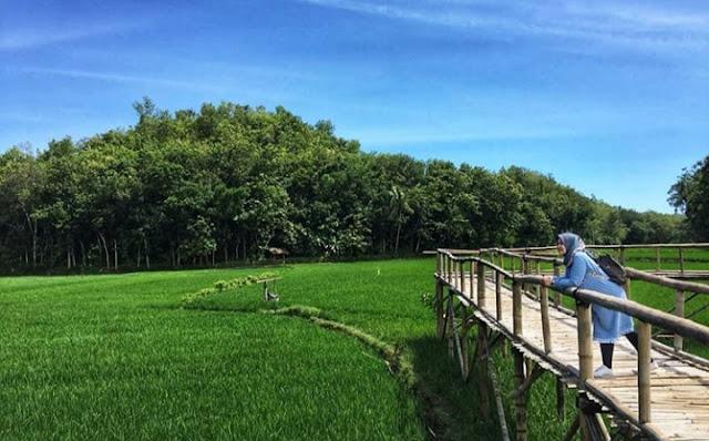Spot Hits Bantul, Lokasi Persawahan Sukorame dan Harga Tiket Masuk