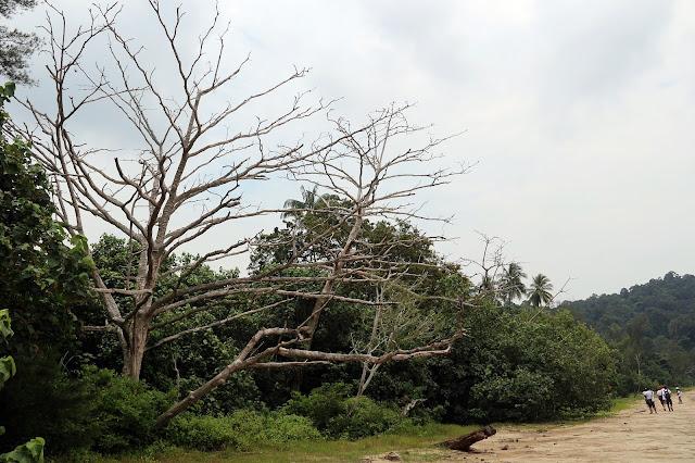 pantai Bako national park