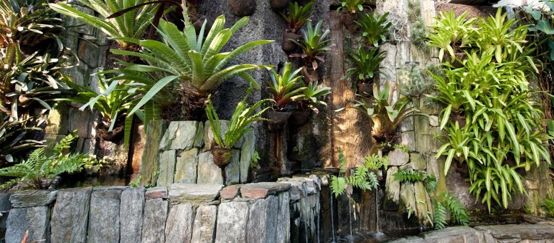 jardin tropical con piedras, bromelias y helechos