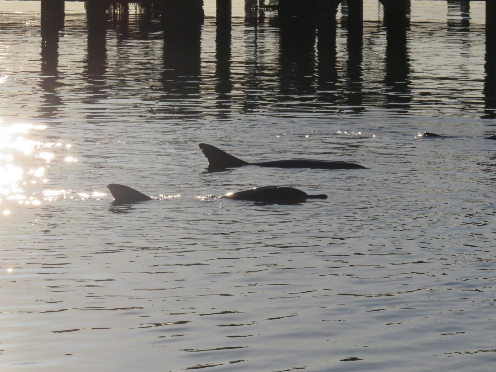 Nainen dating delfiini