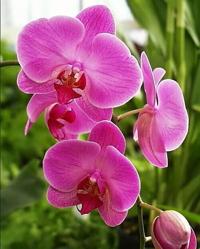 62 Nama Bunga Dan Negara Asalnya Ruana Sagita
