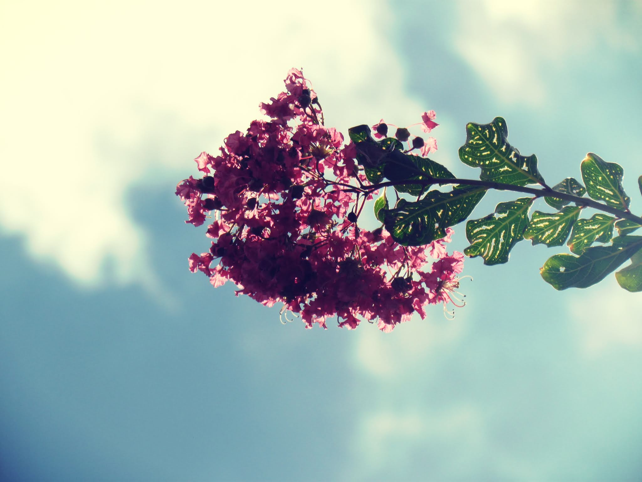 A flowering tree, dogwood trees in Florida, blue skies, whimsical cloud shapes, nature blueprint