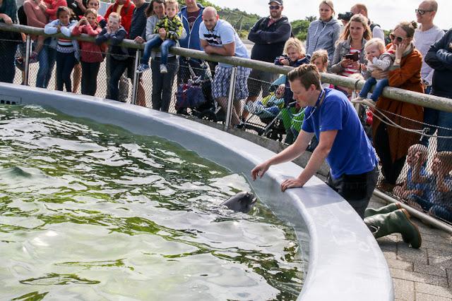Schweinswale Ecomare auf Texel