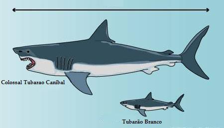 :: Tiburón blanco de 3 metros devorado por algo em oceano / Tubarão de 3 metros devorado por um ...