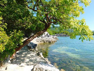 seaside trail, good energy tree, #payabay, #payabayresort, paya bay resort,