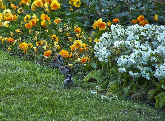 FOTO DE PRIMAVERA flores amarillas y flores blancas.