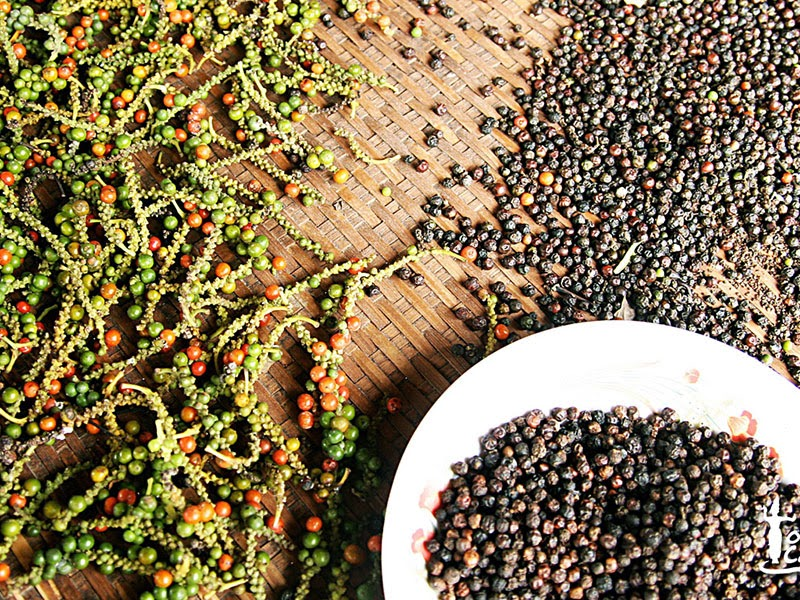 Vietnam: Pepper production has climbed 36 percent in the past five