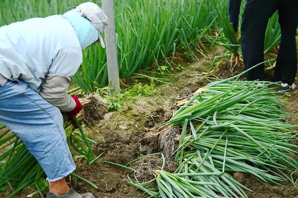 輕度颱風「盧碧」來襲 台中農改場籲農民加強作物防颱