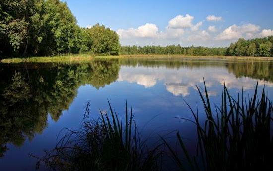 O rewitalizacji Górnego Śląska, czyli przyroda nieodkryta - Czytaj więcej »