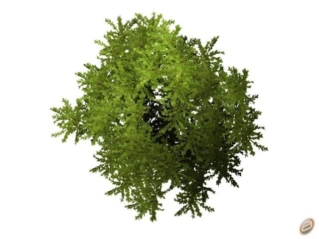 Arboles Psd Planta