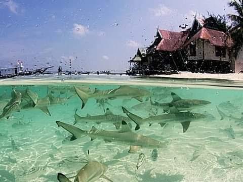 Pulau Tinabo Dipuji Komisioner KPU, Kalahkan Keindahan Kuta Bali