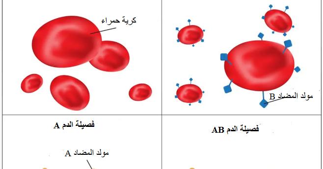 كيف تعرف فصيلة الدم مع أو بدون فحص الدم ما هي أندر فصيلة الدم