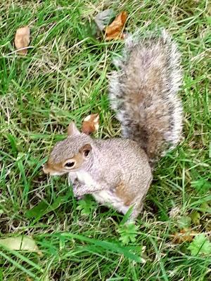 Mudchute farm - squirrel