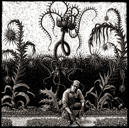 12-Carnivorous-Plants-Douglas-Smith-Scratchboard-Drawings-Through-Time-and-Lives-www-designstack-co