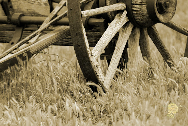 Vintage Wagon Wheel In Sepia Photography