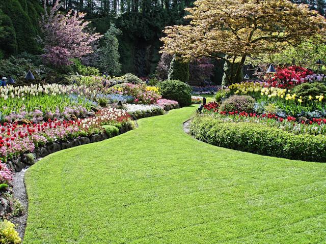 Hills of Flowers backyard landscaping