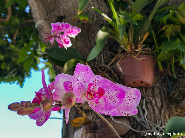 Orchids on Trees I