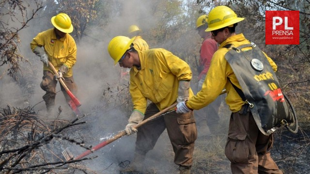 CONAF llama a postular a las brigadas forestales