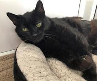 black cat on cat bed